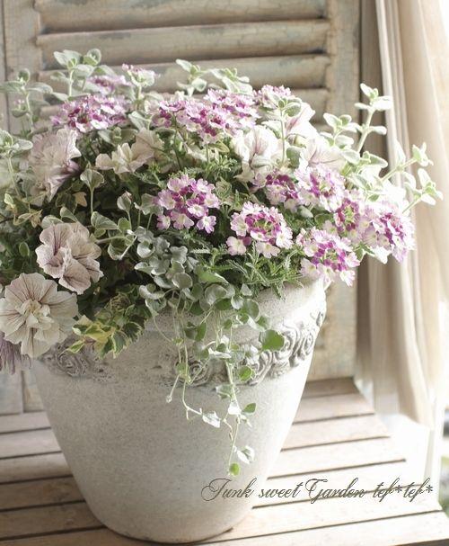 こんな深夜に独り言・・・(笑)母の日の出荷を無事に終え、ほっとしています。毎年の定番の寄せ植えや、紫陽花やカーネーションを全国のたくさんのお母さんにお届け出来て...