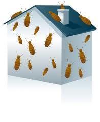 London Ontario Pest management