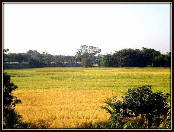 Photo Blog - Of Flowers and Rice Fields in Assam - Destiny's Child