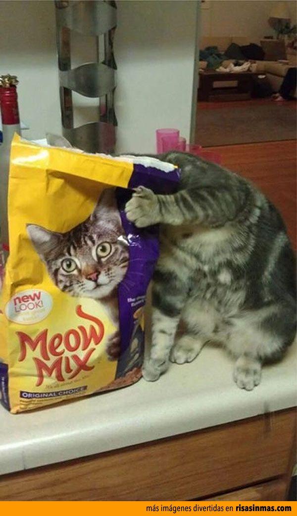 Gato escondido.
