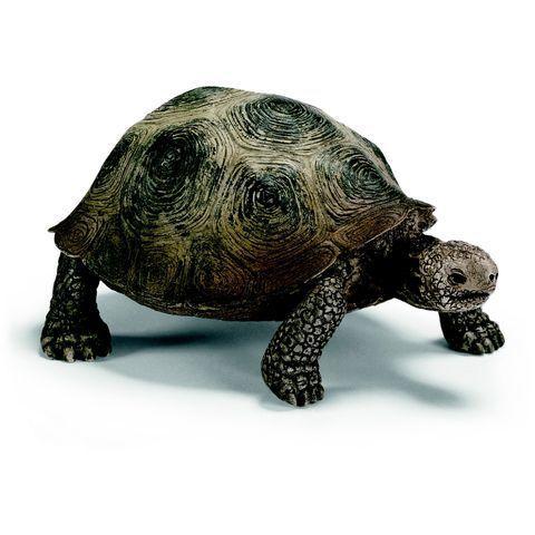 les 25 meilleures id es concernant carapaces de tortues sur pinterest carapaces de tortues. Black Bedroom Furniture Sets. Home Design Ideas