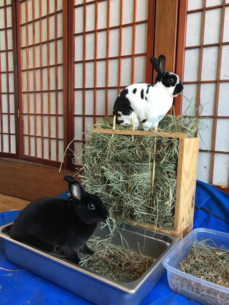 Nothing like a very full hay feeder to get your Friday started right... Happy almost weekend from Chicken (spots) and Waffles (black) http://ift.tt/2uHaL1q