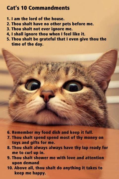 11. Thou shall always leave a window open so i can talk to the birds. 12. Thou shall never get mad when i drink from your water glass and get my fur in it. 13. Thou shall forever pick up whatever i decide to throw on the floor from the counters and the table.