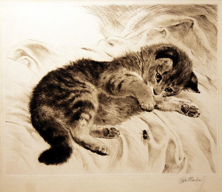 Vintage Cat And Dog Photos
