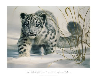 Ian Coleman snow leopard