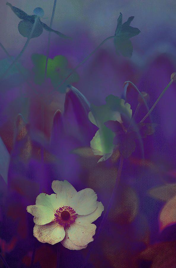 Twilight Magic by Jenny Rainbow