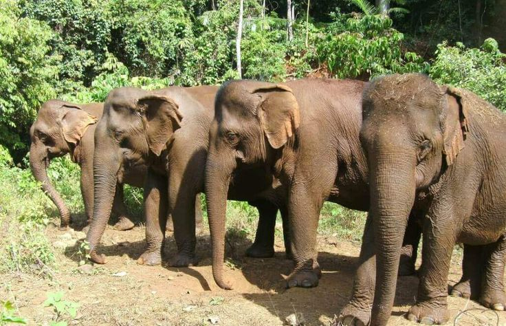 Volunteer in Cambodia - Elephant Sanctuary & Forest Conservation
