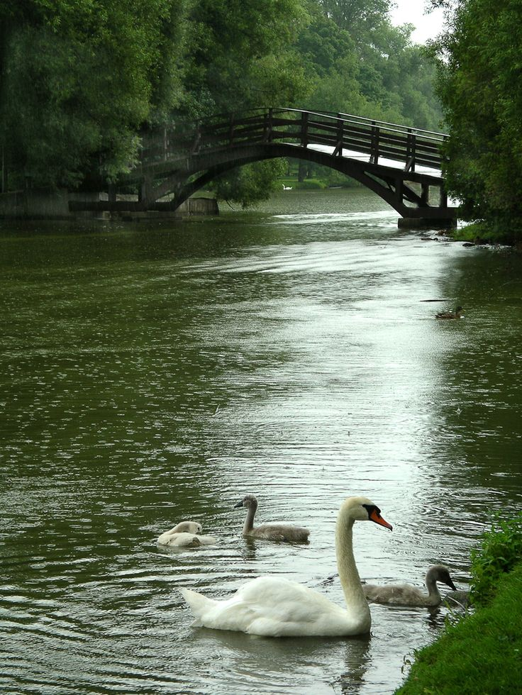 Stratford, Ontario Canada. A beautiful little town, had  a picnic lunch by the river and went to a play.