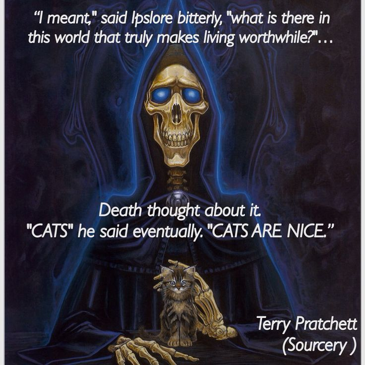 """CATS"" he said eventually, ""CATS ARE NICE."" Terry Pratchett (Sourcery)."