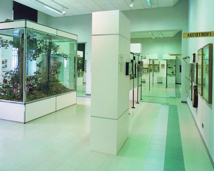 Museo di Storia Naturale di Stradella