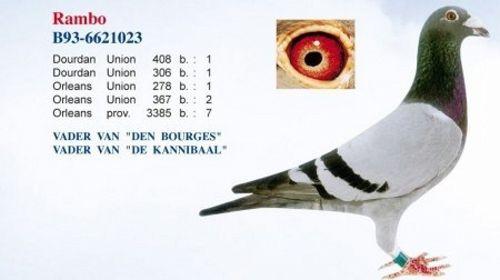 De Belgische Reisduif