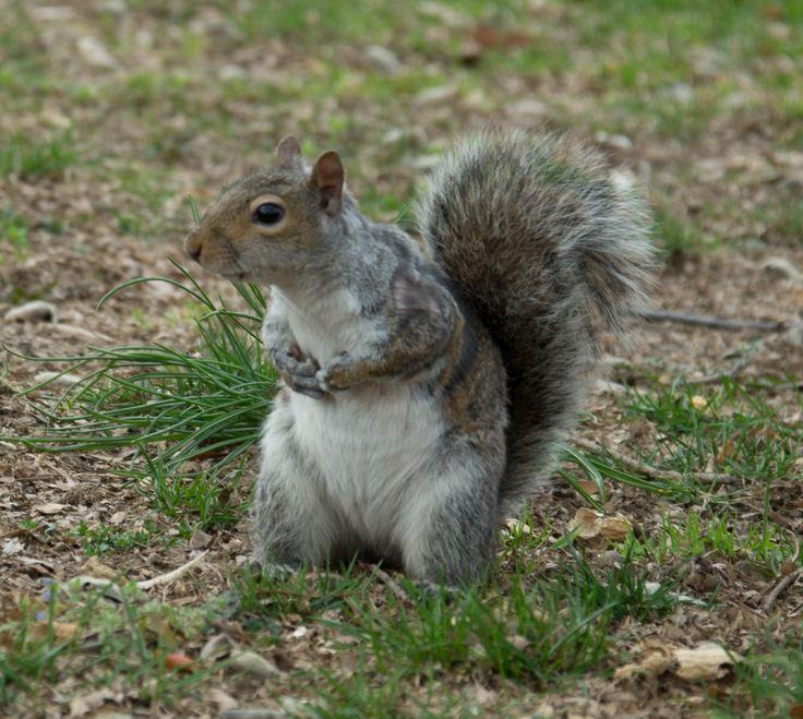 Squirrel enjoying near White House Washington USA