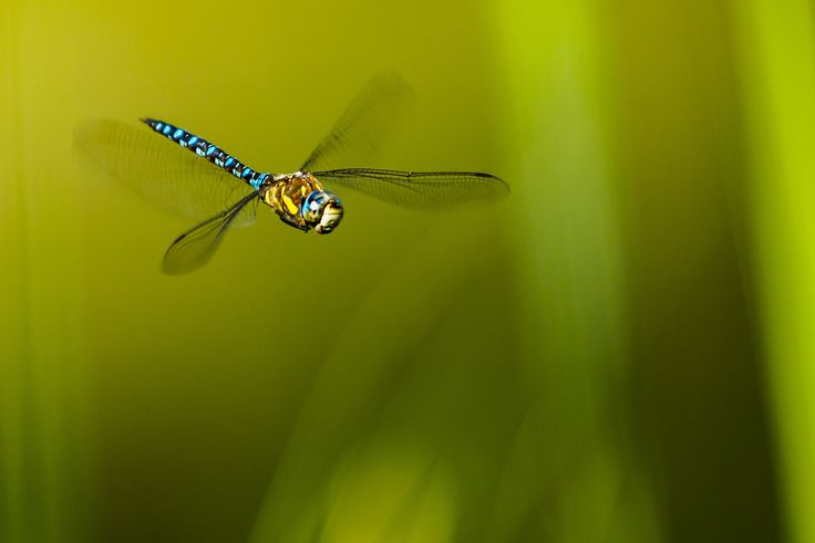 The Emperor in flight by Chris  Froome on 500px