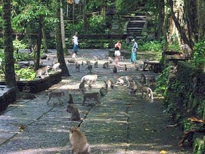 The Sacred Monkey Forest of Padangtegal, Ubud – Bali « Private Tour Driver Bali Island
