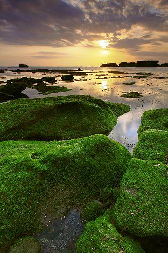 Mossy Rocks Mengening Cemagi, Bali, Indonesia