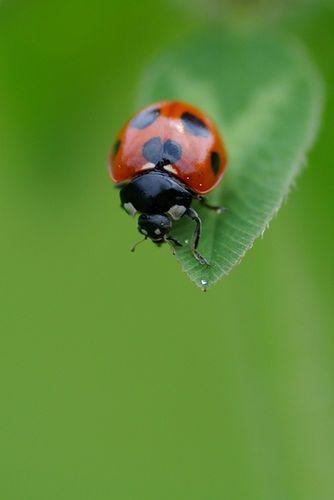 Lovelybug