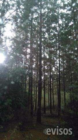 Vendo bosque de pino Vendo 17 hectáreas de bosque de pino, radiata de 16 a .. http://quirihue.evisos.cl/vendo-bosque-de-pino-2-id-603314