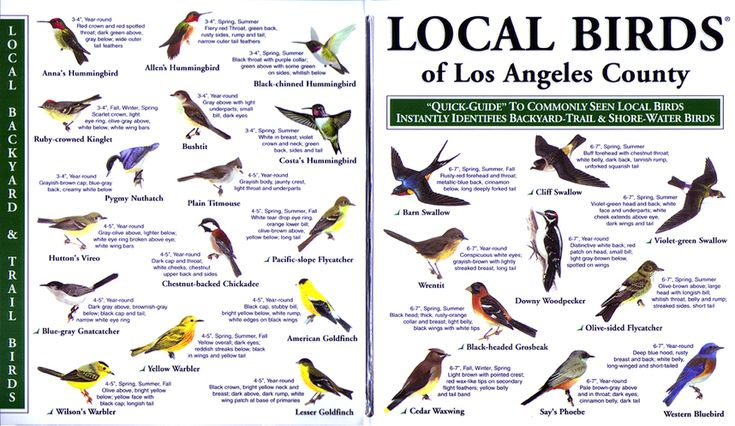 Local birds quick guides to nature science bird