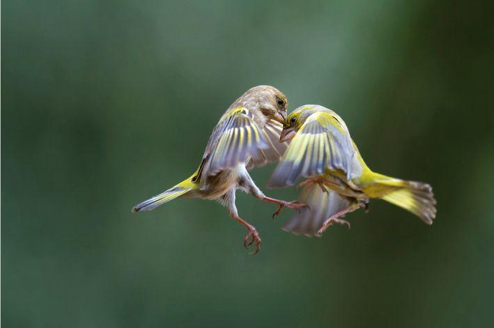 http://100mm.it/2013/10/17/nature-photography-marco-redaelli-intervista/