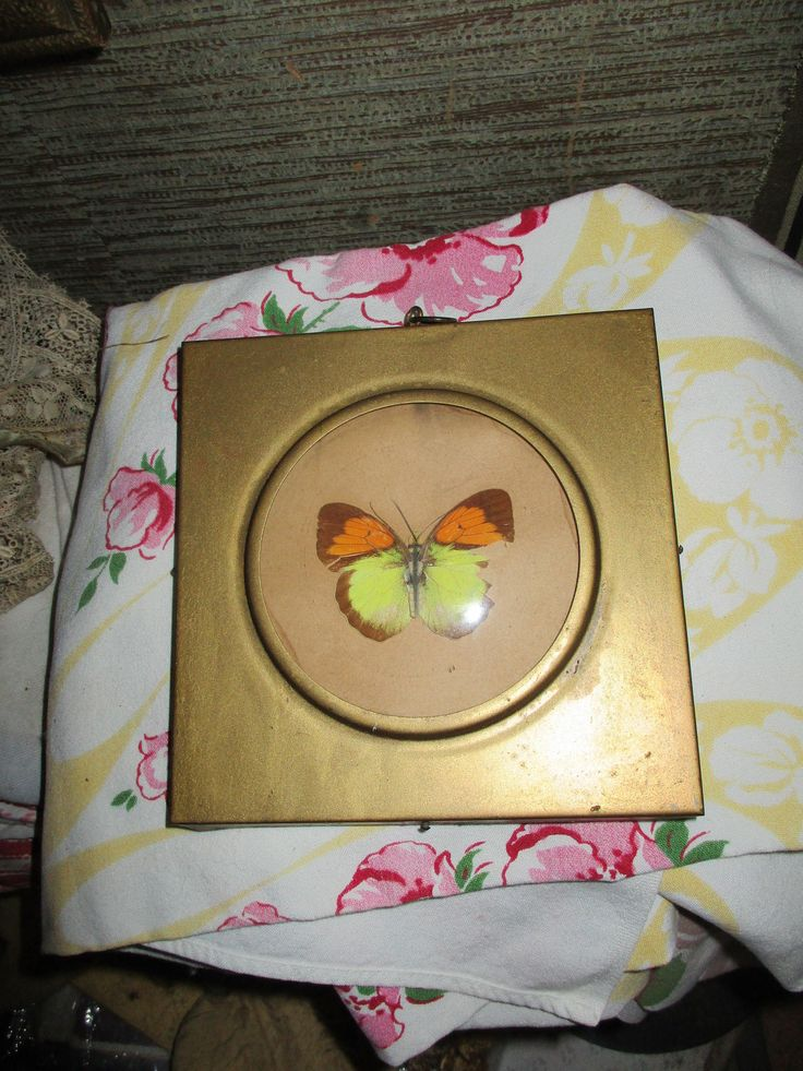 Vtg Gold Tone Convex Bubble Glass Framed Real Butterfly Tab Top Metal Picture Frame by treasuretrovemarket on Etsy