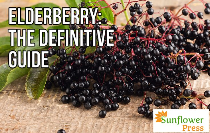 The Definitive Guide To The Elderberry - This is the most amazing guide on elderberry that I've come across!