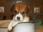 Donate to name these pups! http://fureverdachshundrescue.wordpress.com/2012/07/24/donate-to-name-these-puppies/