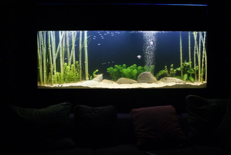 Aquascaping With Lucky Bamboo New Discus Tank Wishlist