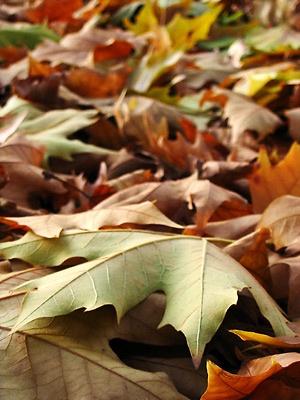 les 25 meilleures id es de la cat gorie feuilles mortes sur pinterest les feuilles mortes. Black Bedroom Furniture Sets. Home Design Ideas