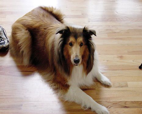 Best pet friendly flooring options for dogs flooring options for Dog friendly flooring ideas