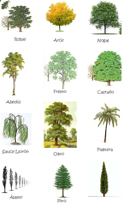 de miranda los árboles nombres de flores nombres de arboles tipos de