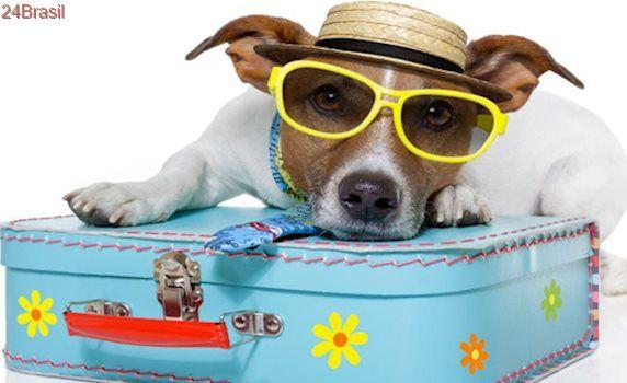 Pet friendly: veja hotéis e pousadas que aceitam bichinhos no ES