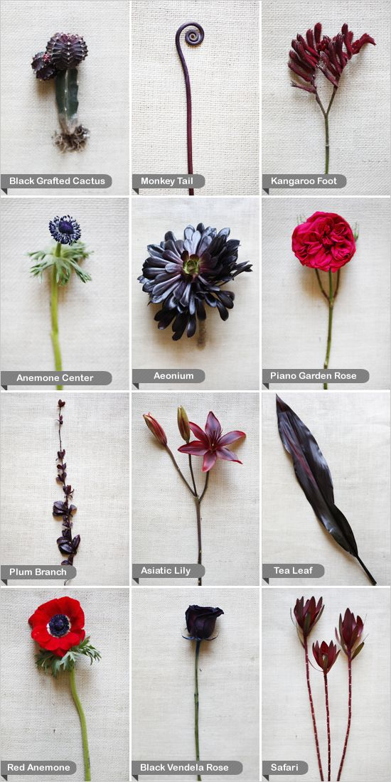 plum branch, monkey tail, tea leaf, asiatic lily, kangaroo foot, aeonium, red ranunculus, safari, black vendela rose, piano garden rose, red grafted cactus and an anemone center