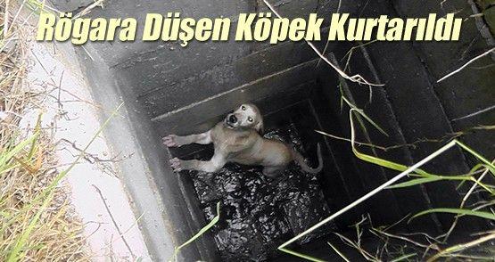 Rögara Düşen Köpek Kurtarıldı