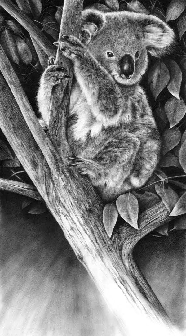 Hyper-Realistic Wildlife en 2020   Dessin koala, Animaux à ...