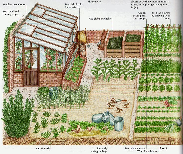 1000 images about homestead ideas on pinterest for Small garden plot ideas
