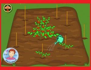 Zaaien, groeien en oogsten voor kleuters op digibord of computer, kleuteridee