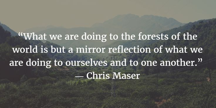 - 25 Quotes About Forests That Inspire You to Take Care of Nature! - EnkiVillage