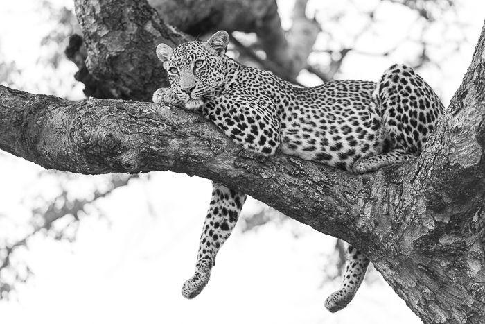 The incredibly beautiful Nanga female. Photograph by Simon Smit