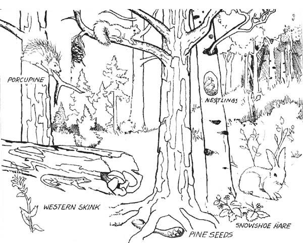 Forest Where Animals Live Coloring Page Coloring Sky Forest