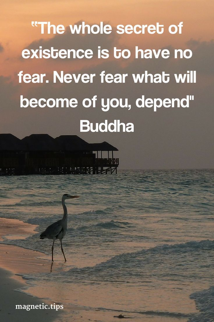 """what will become of you, depend"""" Buddha Don't worry about the future, just focus on the present moment in time. You can read my blog post to find out about mindfulness and how it can help you in your life"""