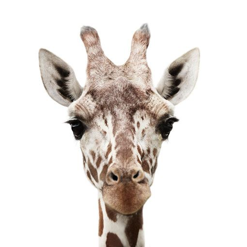 Animal portraits by Morten Koldby. Click for a link to more.
