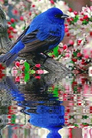 Blue Bird Ripple Reflection. Remembering to throw seed for the Winter Songbirds. yet I say unto you, that even Solomon in all his glory was not arrayed like one of these. Matthew 6:29