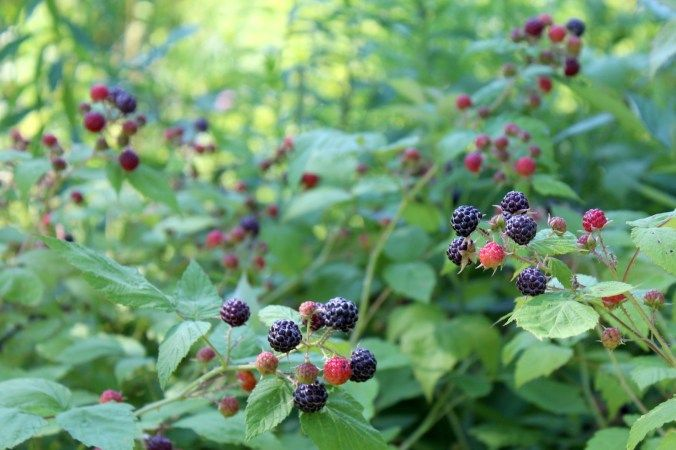 How To Plant An Orchard For Year Round Fruit Even In Cold Climates Raspberry Plants Flower Farm Growing Raspberries