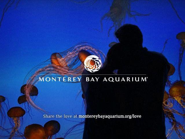 Monterey Bay Aquarium: Love Campaign - Jellies :15