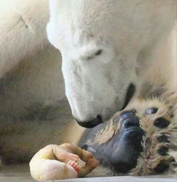 Newborn Polar Bear Cub   Nature nexus   Pinterest