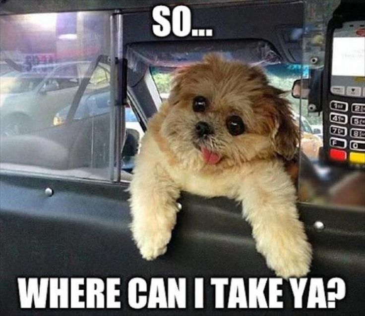 Funny Animal Pictures Of The Day – 22 Pics Check out http://funny-animalz.com/ for amazing and funny animal pictures, videos, gifs and more