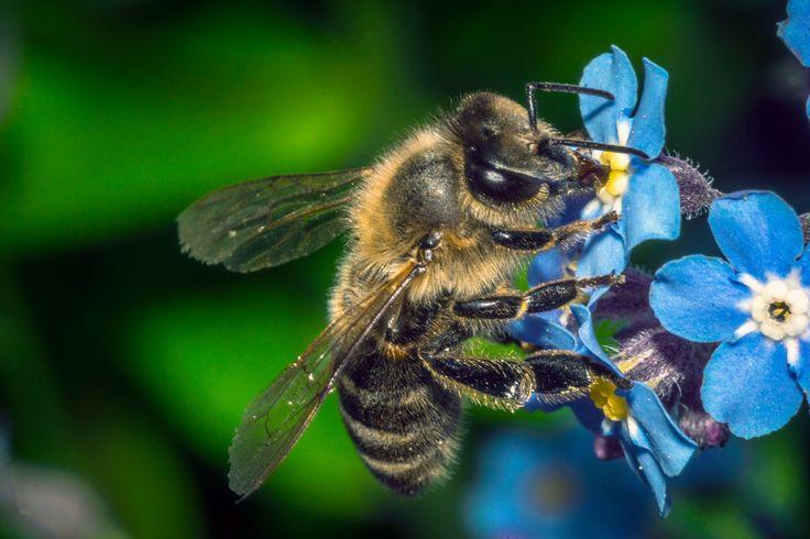 bee 1 - bee
