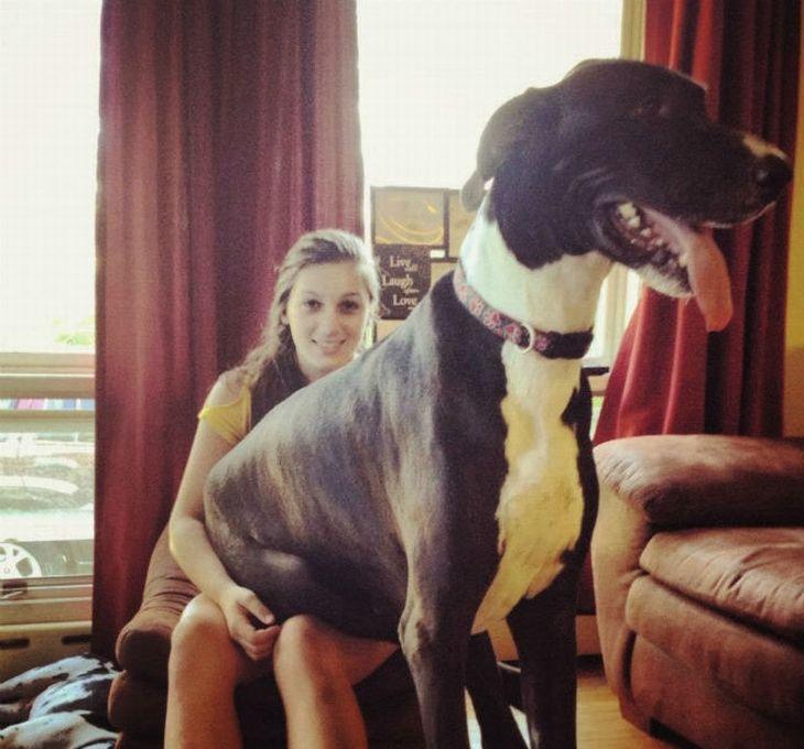 velcí psi