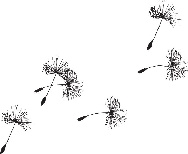 Free Vector Graphic: Dandelion, Seed, Flora, Grass - Free Image on ...