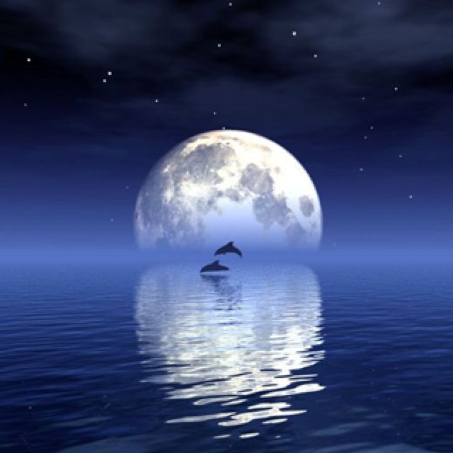 .Moon reflecting off the water with dolphins jumping